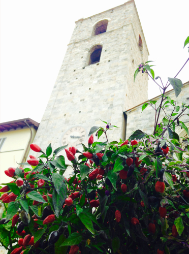Si farà la XIII° Festa Pic - 10 e 11 ottobre torna l'evento dedicato al peperoncino