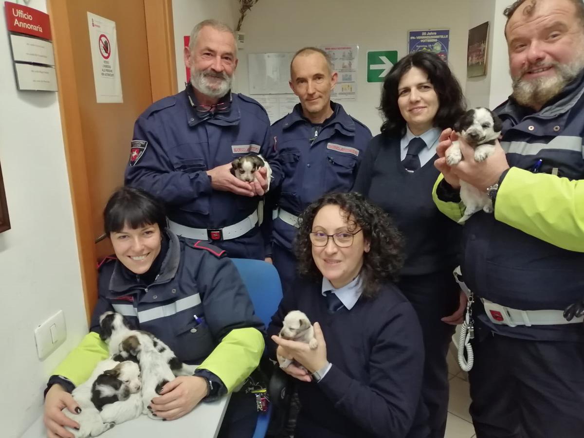Abbandonata cucciolata di cani: presa in custodia dalla PM